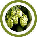 Extract of Hops